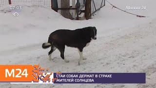 По столичному району Солнцево разгуливают стаи бродячих собак - Москва 24