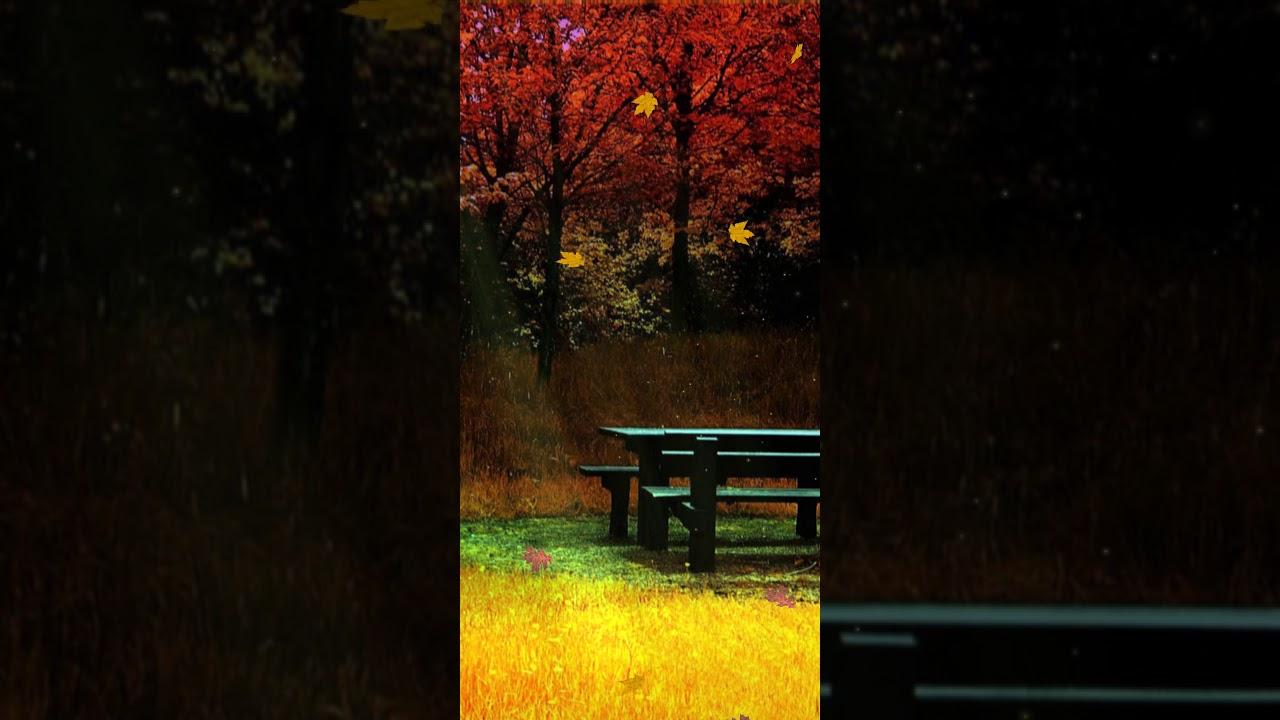 Cute Fall Backgrounds Live Wallpaper Autumn Scenery Wallpaper