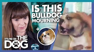 These unusual Dog Behaviors Put Victoria Stilwell to the Test! | It's Me or The Dog