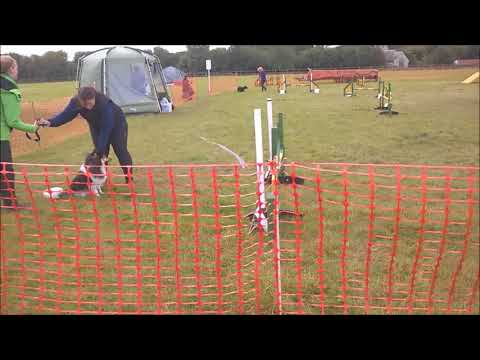 TA KC Open  Show, September  Jumping E and Agility 5f Dog Walk