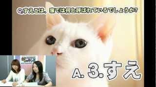 猫専門番組「ねこである。」!ひたすらネコ!neko!ぬこー!な60分☆ htt...
