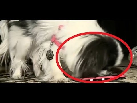 Dog Dials 911 On Cell Phone In Nebraska