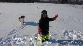 Дети и собаки. Тим рассказывает о своей работе с собаками