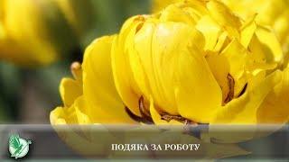Подяка за роботу | Телеканал Новий Чернігів
