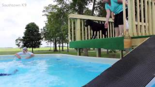 Lindy Lou's First Leap - Dock Dog Diving Training - Southtown K9