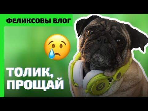 Как пережить смерть собаки | Как поговорить с детьми | Феликсовы Влог 1 #Мопс