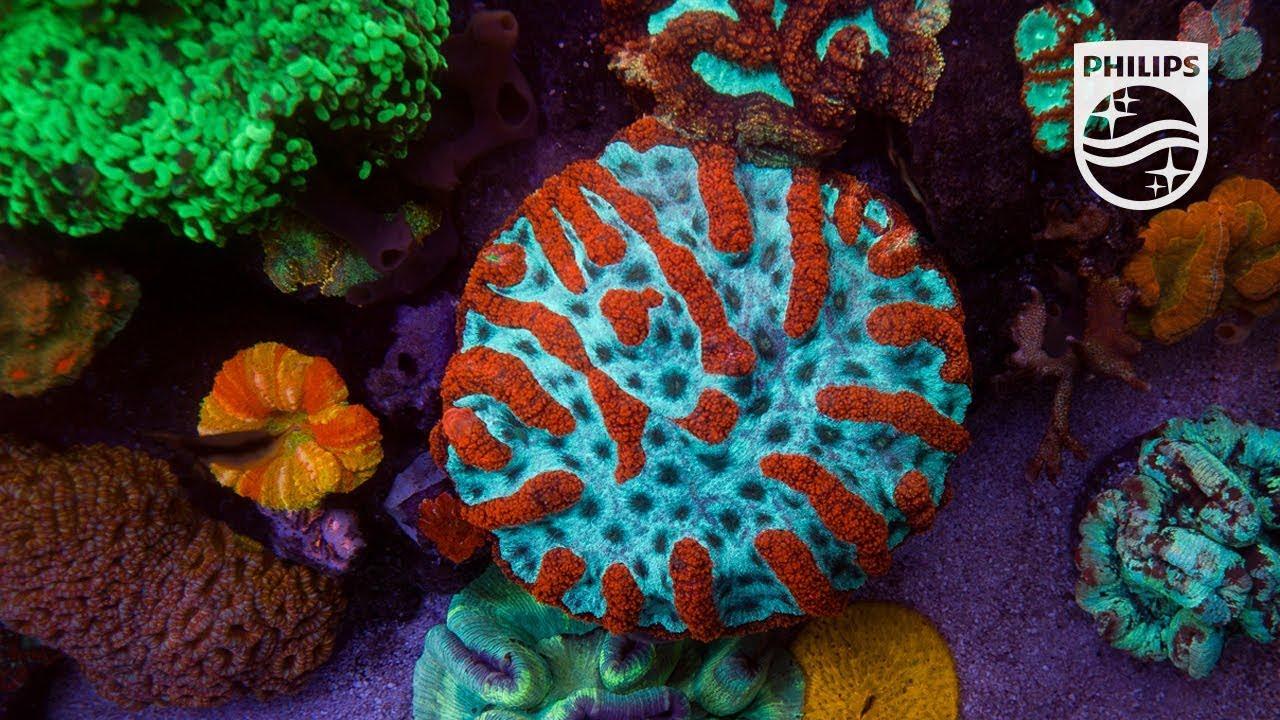 Migliora il tuo acquario con gli apparecchi per illuminazione