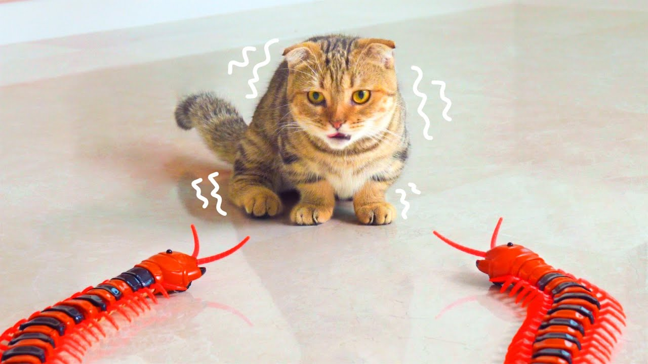 Cats React To Giant Centipedes   Compilation