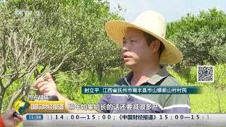 [国际财经报道]热点扫描 江西南丰:强降雨致蜜桔受灾 预计损失4亿元| CCTV财经