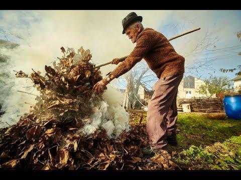 Это преступление! Нужно ли сжигать опавшие листья
