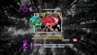 Video Bintang 5 - 5 Burung Cendrawasih Terindah download MP3, 3GP, MP4, WEBM, AVI, FLV Oktober 2018
