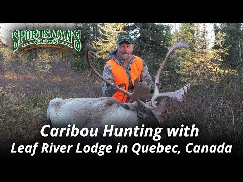 Caribou Hunting With Leaf River Lodge In Quebec, Canada