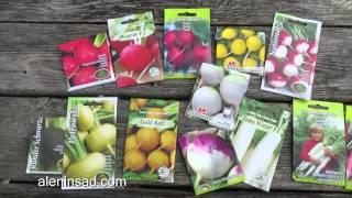 видео Выращивание редьки летней