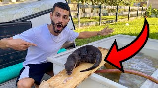 BABY OTTER GETS *NEW* DIY BATHTUB!! WILL HE LIKE IT ?