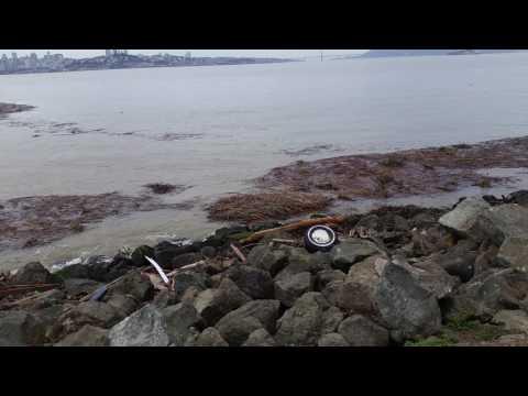 Storm debris in SF Bay