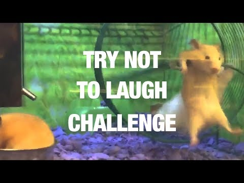 The Ultimate Try Not to Laugh Challenge