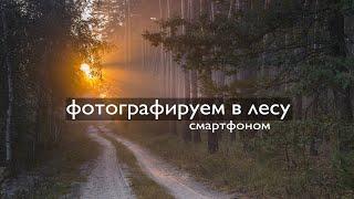 Фотографируем лес смартфоном  / We photograph the forest with a smartphone