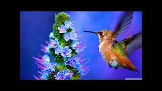Video Satoyama 1 - Japans Secret Watergarden feat& David Attenborough - HD 720p. download MP3, 3GP, MP4, WEBM, AVI, FLV September 2018