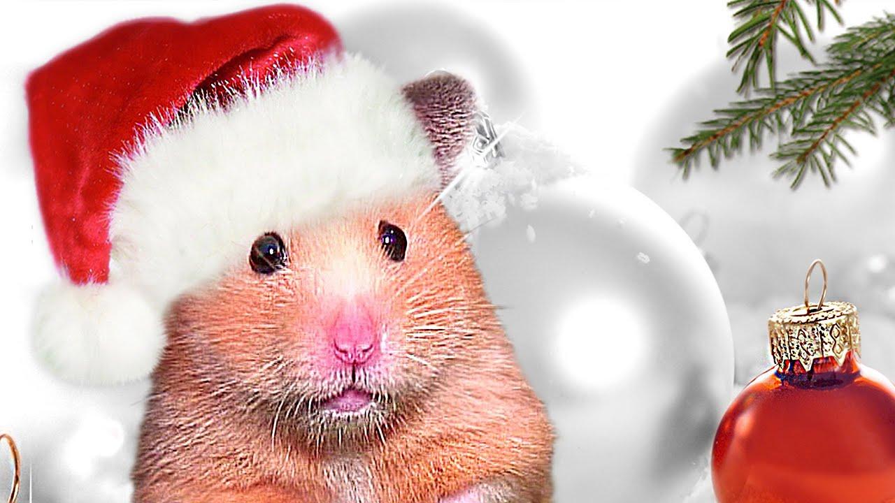christmas hamster baking cookies mrs emma the hamster weihnachtspl tzchen x mas nom nom youtube. Black Bedroom Furniture Sets. Home Design Ideas