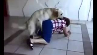 собака играет с домохозяйкой