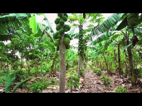 Nông nghiệp sinh thái Phương thức vượt trội hơn cả nông nghiệp hữu cơ   Trí Thức VN