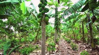 Nông nghiệp sinh thái Phương thức vượt trội hơn cả nông nghiệp hữu cơ | Trí Thức VN