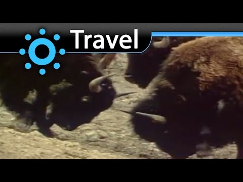 Rocky Mountains USA Bison (Tatanka) Vacation Travel Video Guide
