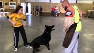 "Kids And Dogs ""cooper"" Black German Shepherd Trained Obedience Protection For Sale"