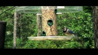 Bird Feeder  & Blind House / Bird Watch Coastal Ga (wild Birds Unlimited Feeder)