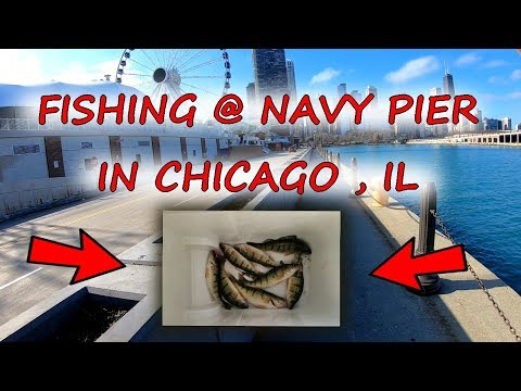 Fishing In Chicago @ Navy Pier For Perch!!! (November 2019)