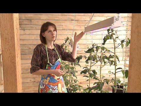 Семья из Вологодской области построила биовегетарий