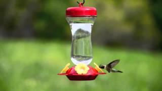 "Perky-Pet® ""Perky's Finest"" 16 oz. Top Fill Glass Hummingbird Feeder"