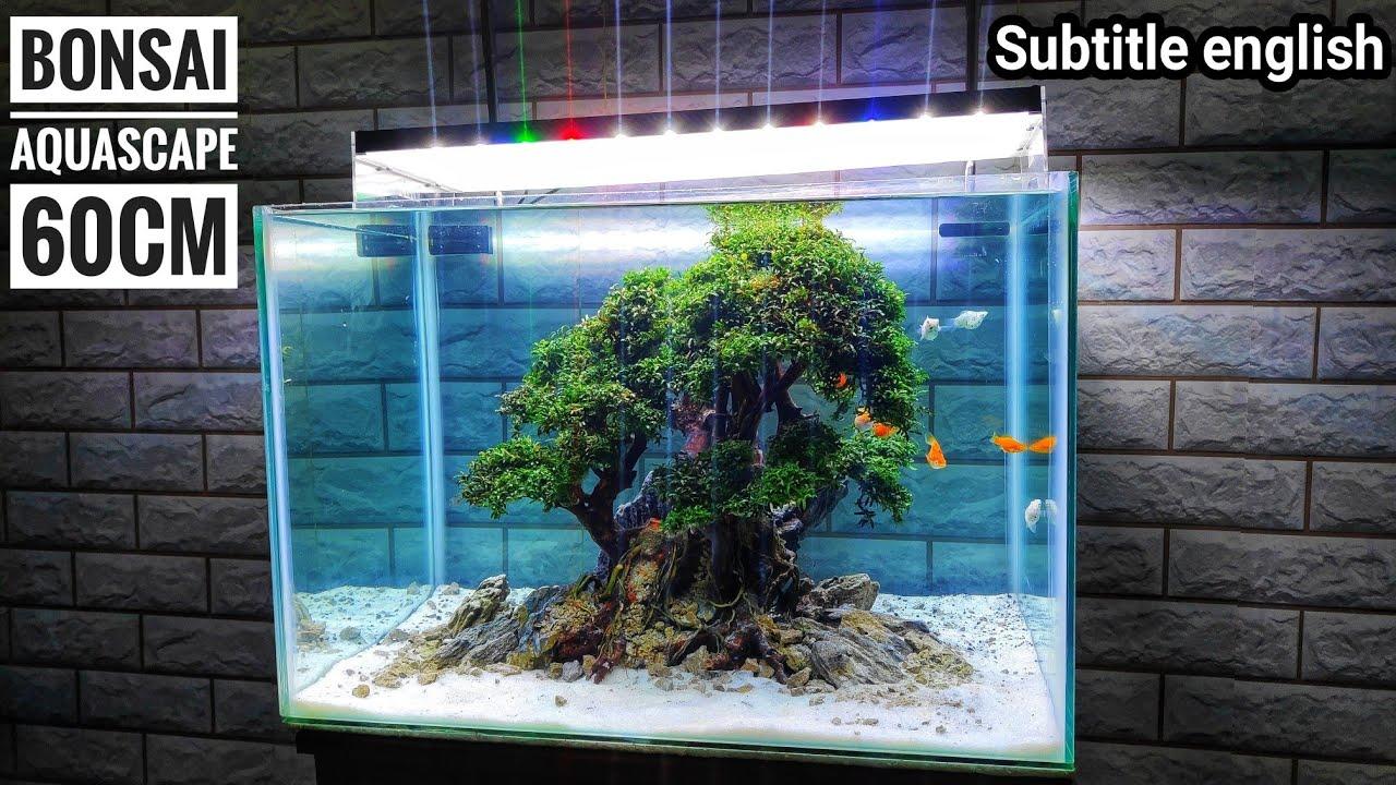 160 Membuat Bonsai Aquascape 60cm Model 1 Youtube