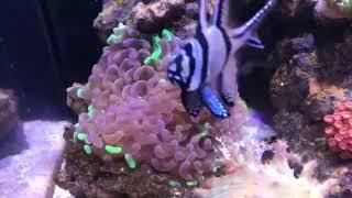 Ben's reef tank