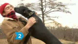 How To Use Dog Whisperer Tips On A Dog Who Barks Incessantly