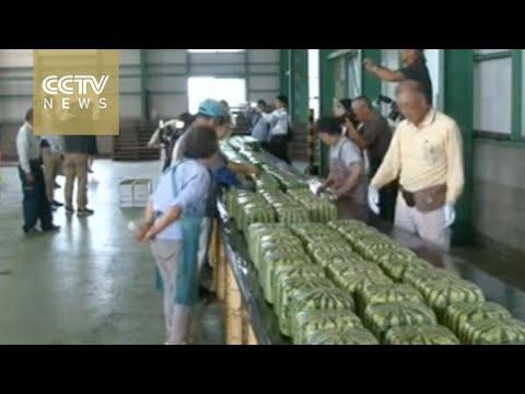 Japan begins selling square watermelons