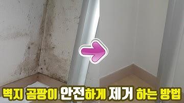 쉽고 안전한 벽지 곰팡이 제거 방법 (올바른 락스 사용방법)
