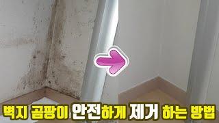 쉽고 안전한 벽지 곰팡이 제거 방법 (올바른 락스 사용…