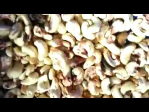 6 unit Ancoo cashew nut sorting machine running in Vietnam