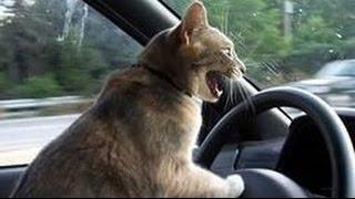 Приколы. Кот боится ездить в автомобиле(Приколы. Кот боится ездить в автомобиле. .Приколы видео ТВ- это подборка лучших приколов для хорошего настро..., 2015-12-30T17:01:56.000Z)