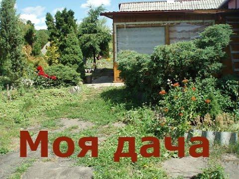 Цветы. Дача. Сумерки на моей даче