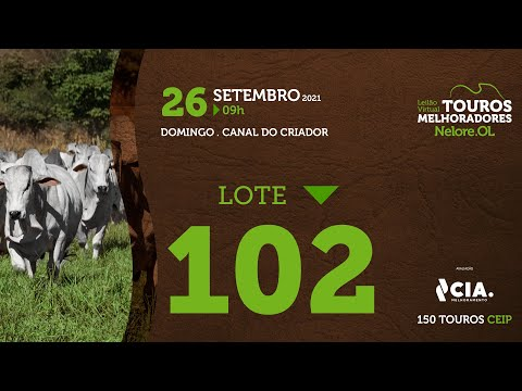LOTE 102 - LEILÃO VIRTUAL DE TOUROS 2021 NELORE OL - CEIP