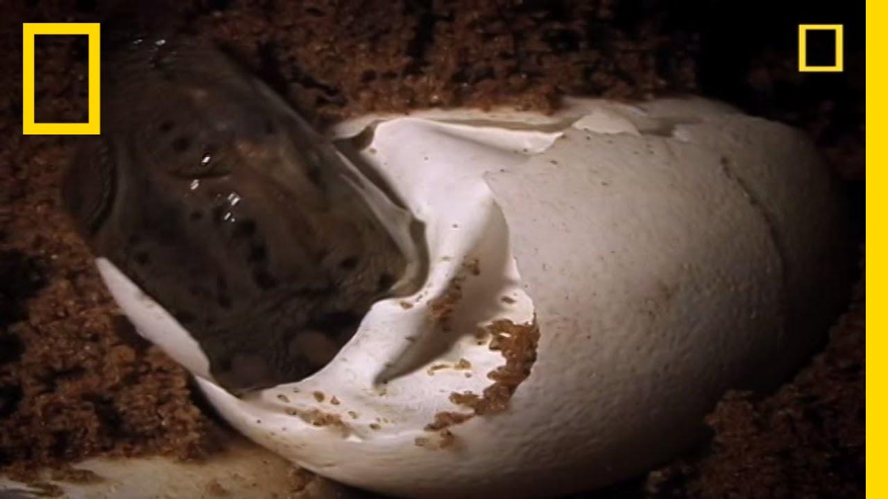 a5edcb852 Baby Crocs Hunt Quickly