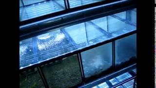 Fish Room Update - New 20 Tank Shrimp Rack :)