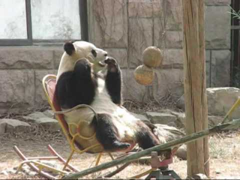 chair images hd brown leather swivel with footstool panda ying hua on rocking 熊猫瑛华坐摇椅 - youtube