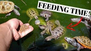 INSANE TURTLE Pond FEEDING!!!   |   *Update*