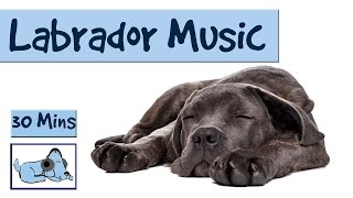 We love Labradors at Relax My Dog! So why not give yours a treat an...
