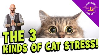 Cat Stress: What You Need to Know!