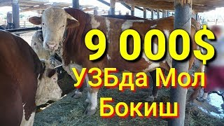 Бизнес Мол Бокиш 9000$