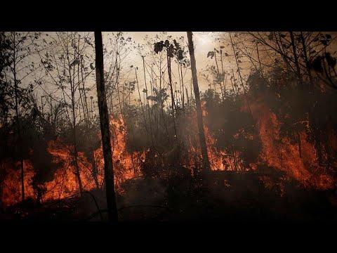 بعد ضغوط دولية .. البرازيل ترسل الجيش لمكافحة حرائق الأمازون …  - نشر قبل 7 ساعة